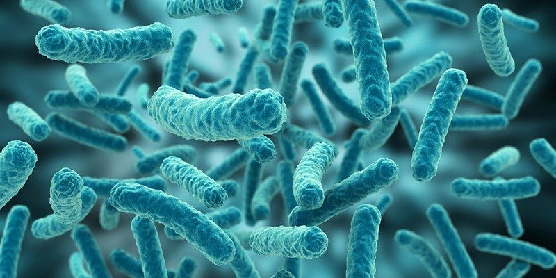 La Complutense implica estudiantes a investigar nuevos antibióticos, La Complutense implica estudiantes a investigar nuevos antibióticos, Revista NUVE