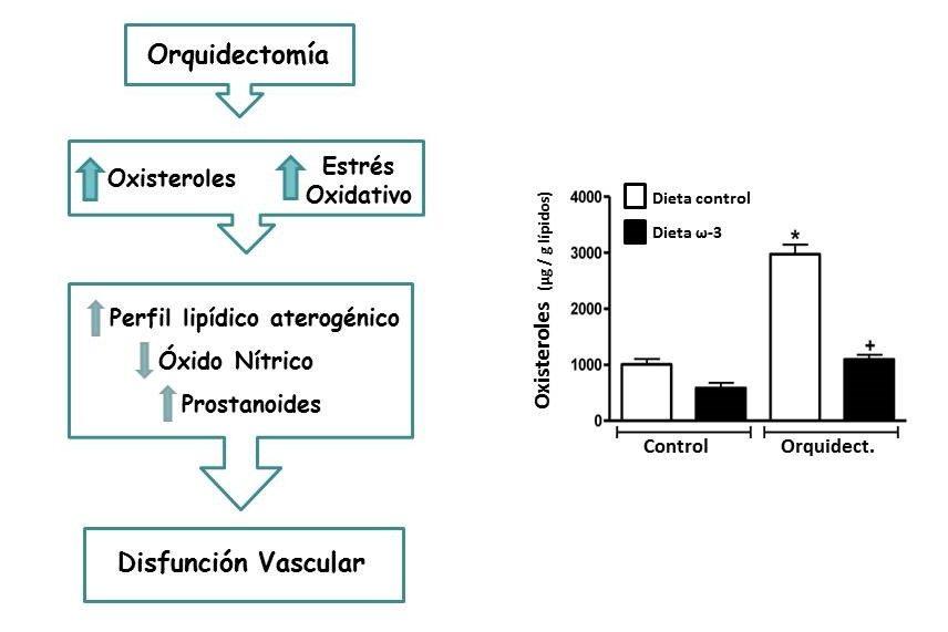 Ciencia Salud : cáncer de próstata y colesterol, Ciencia Salud : cáncer de próstata y colesterol, Revista NUVE