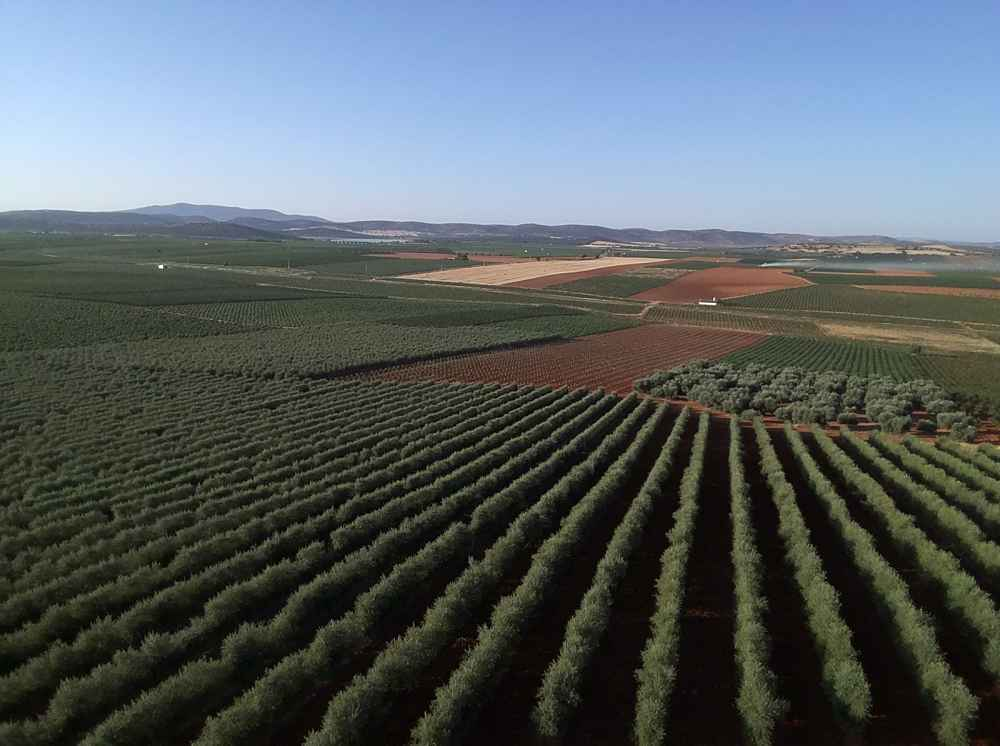 Beneficios del cultivo superintensivo de olivar, Beneficios del cultivo superintensivo de olivar, Revista NUVE