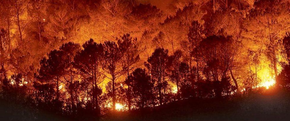propuesta para la detección de incendios forestales, Una propuesta para la detección de incendios forestales se alza con el premio de #AceleradoraDeIdeas, Revista NUVE