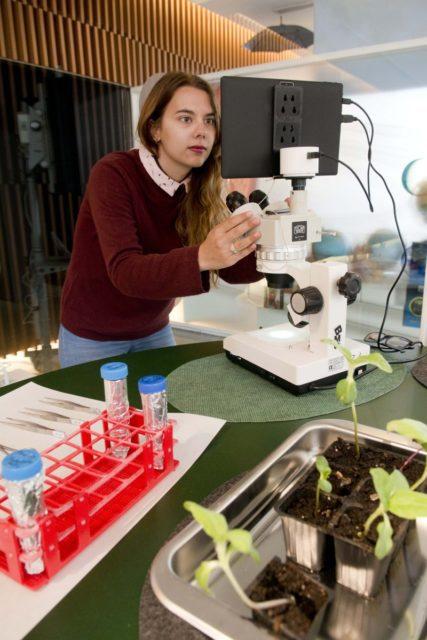 La UJA muestra qué estresa a las plantas, La UJA muestra qué estresa a las plantas, Revista NUVE