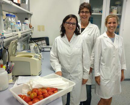 Aroma del tomate para proteger cultivos, Aroma del tomate para proteger cultivos, Revista NUVE