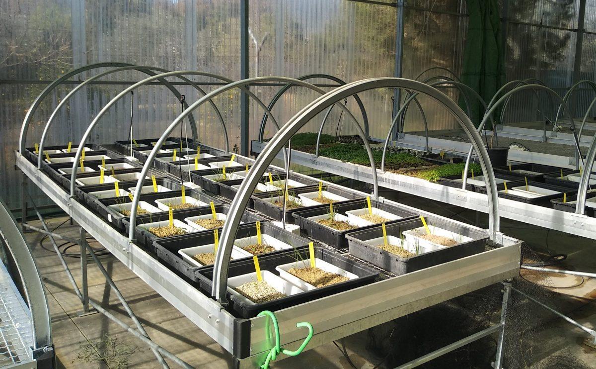 Proyecto para implantar cubiertas herbáceas en el olivar, Proyecto para implantar cubiertas herbáceas en el olivar, Revista NUVE