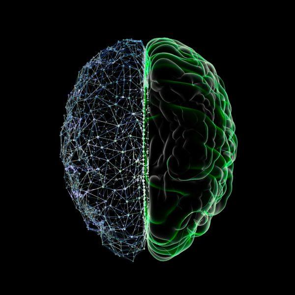 Empatia cerebro I A