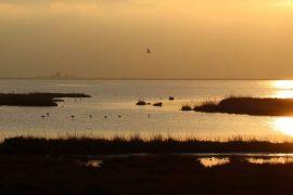 El tratamiento de las aguas urbanas provoca cambios en la flora y fauna de los ríos.