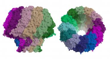 Proteina virus Epsten_Barr