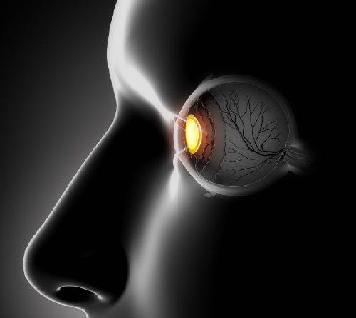 Qué zonas de la retina cambian con alzhéimer leve, UCM ,Qué zonas de la retina cambian con alzhéimer leve, Revista NUVE