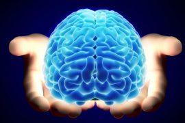 Cerebro en Desrrollo